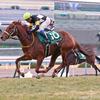 【京都牝馬S2018】予想オッズ・出走馬分析〜ヴィクトリアマイルへ向けた牝馬重賞