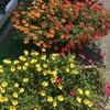 3-109   愛すべき花たち〜暑い中でも頑張っています〜