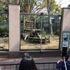 上野動物園でパンダ様を見てきた