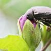 昆虫の世界