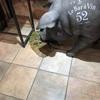 渋谷で黒豚を発見🐽🐖✨