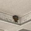 本町公民館入り口に「ツバメの巣」が・・・