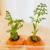 人参の葉はビタミンAが豊富 食べてみよう