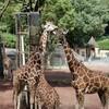 多摩動物園