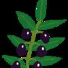 無農薬のオリーブオイルを探している方へ。ワインを飲む前に摂取するので、オリーブオイルの品質にはこだわります