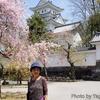 大垣城と桜