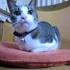 座布団変えましたおネコさま。