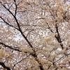 桜、キャベツにアサリ、菜の花にタケノコ、そしてグジュの春。