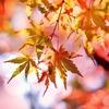 【2018秋】紅葉も料理も旅館も満喫したい!京都でおすすめのお宿3選