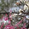 3月の石川東公園に行ってきました