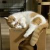 ワクチンの副反応で微熱が続く飼い主、愛猫に監視されています。