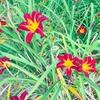 【アメリカ生活】季節のお花+動物 6〜8月