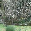 記録的な暖かさ 梅の花咲きオタマジャクシも…