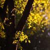 金木犀の匂いが幸せな気持ちにさせてくれる。