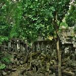 「ベン メリア遺跡(Beng Mealea)」~密林に眠る巨大寺院、天空ラピュタの世界を探訪!!