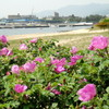 2012/5/17 Early Summer Bloomers