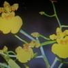 1月21日花と花言葉・歌句