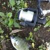 ゴールデンウィーク目指せ淡水五目釣り!最終日は濁りの里川と野池