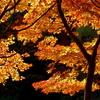 晩秋の彩り(12)