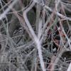 鴛鴦(オシドリ)♂♀