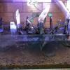 水槽リセット‼️赤玉土底面ろ過水槽立ち上げ③ 生体投入‼️