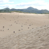 鳥取砂丘⑥:鳥取県鳥取市