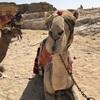 エジプト ピラミッドへ