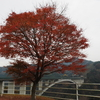 九州マイカー縦断「天翔大橋」紅葉