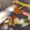 春の植え替え2013 (1)
