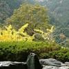 【新祖谷温泉ホテルかずら橋】四国・徳島のオススメスポット【秘境にある天空の露天風呂】