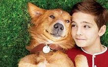今すぐ愛犬の顔が見たくなる映画『僕のワンダフル・ライフ』で愛犬との過ごし方を見直そう!