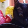 今日の黒猫モモ&白黒猫ナナの動画ー819