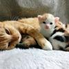 猫の不妊・去勢手術は本当に必要?