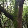 苔むす樹皮。森に自然の共生を見る。