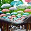 軽井沢の梅雨を彩るアンブレラスカイ@ハルニレテラス
