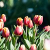 1年間の保育製作は花を取り入れると楽!