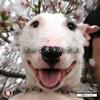 【考察】知ってた? 犬って笑うんだよ Complete ~笑顔と笑い顔は、違うものなんだよ~