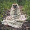 おねだん以上、の毛布。