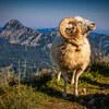 【ヒューマンデザイン】牡羊座新月:成長の分かち合いと告発
