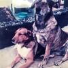 愛犬、Bella & どうぞ