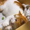 愛猫と遊ぶ。ネオ糸遊び