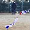 立冬のアリーナツアー 犬の運動会(後半戦-2)