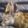 心を癒す小動物の画像集