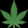 「大麻(マリファナ)」のドラッグ認定について/医療用に解禁しても良いのではと言う意見