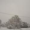 大雪、寒波、タマネギ凍っちゃう