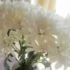 迷ったら白い花