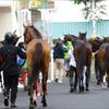 JRAドゥラメンテに種牡馬成功の兆し見えた!? 適性は父キングカメハメハではなく、まさかのアノ馬そっくり?