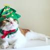 【祝】猫のクリスマスフォトコンテスト2017受賞!!!