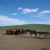 モンゴル旅行記⑯ 遊牧民のゲル