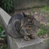 今日の野良猫撮影9